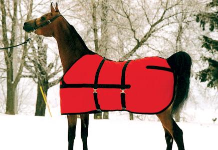 HorseBlanket.jpg
