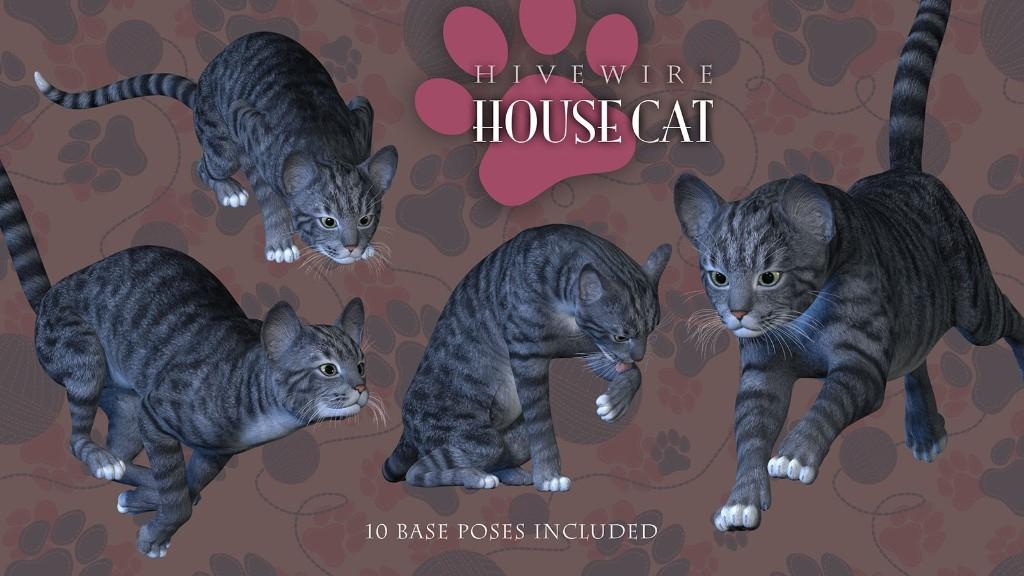 housecat02.jpg