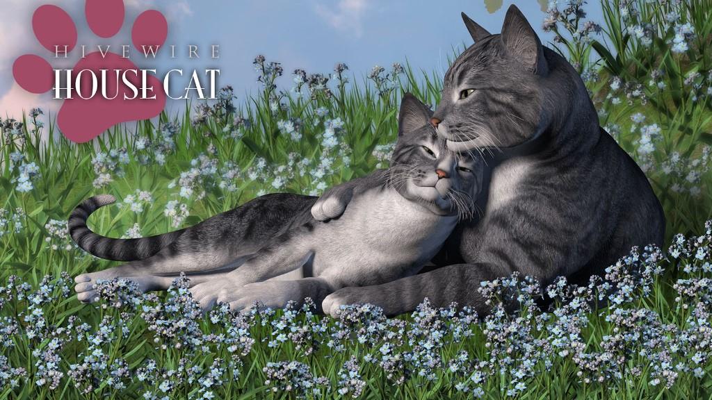 housecat03.jpg