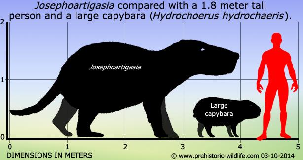 Josephoartigasia monesi -size.jpg