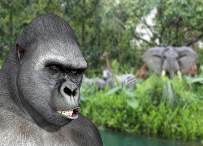 Jungle650.jpg