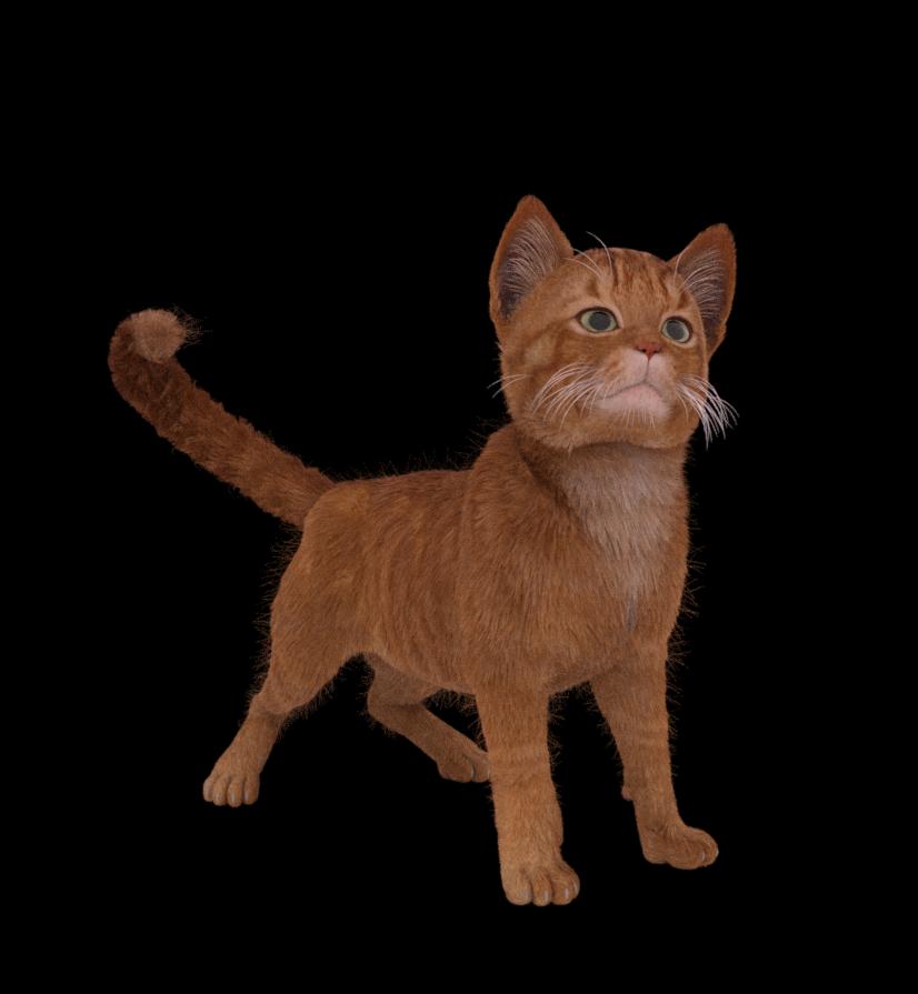 kitten 006.png