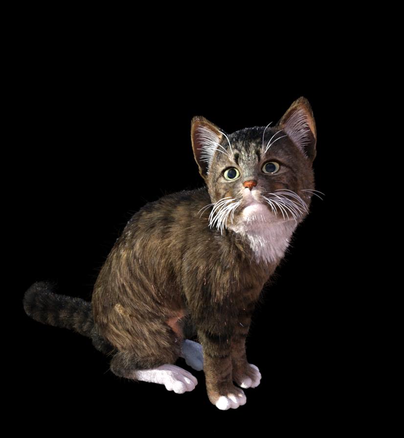 kitten 009.png