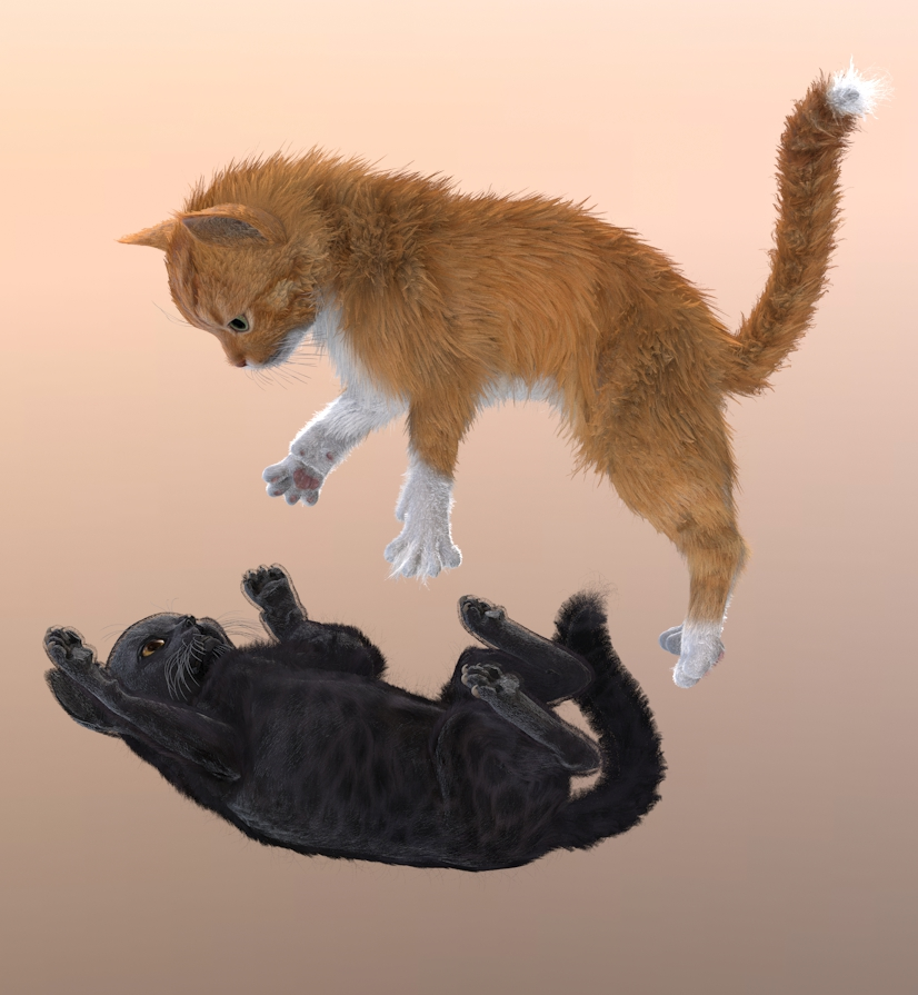 kitten 017.jpg