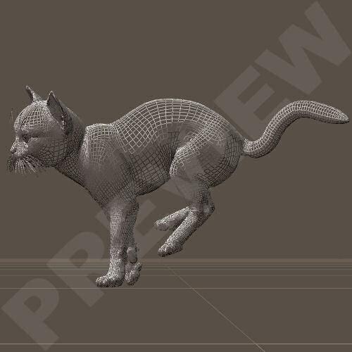 KittenJump01.jpg