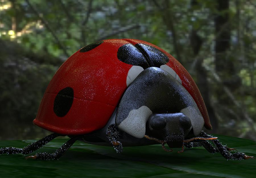 Ladybird.88.jpg