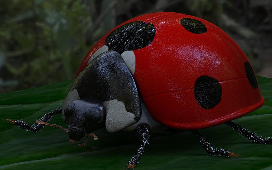 Ladybird.91.jpg