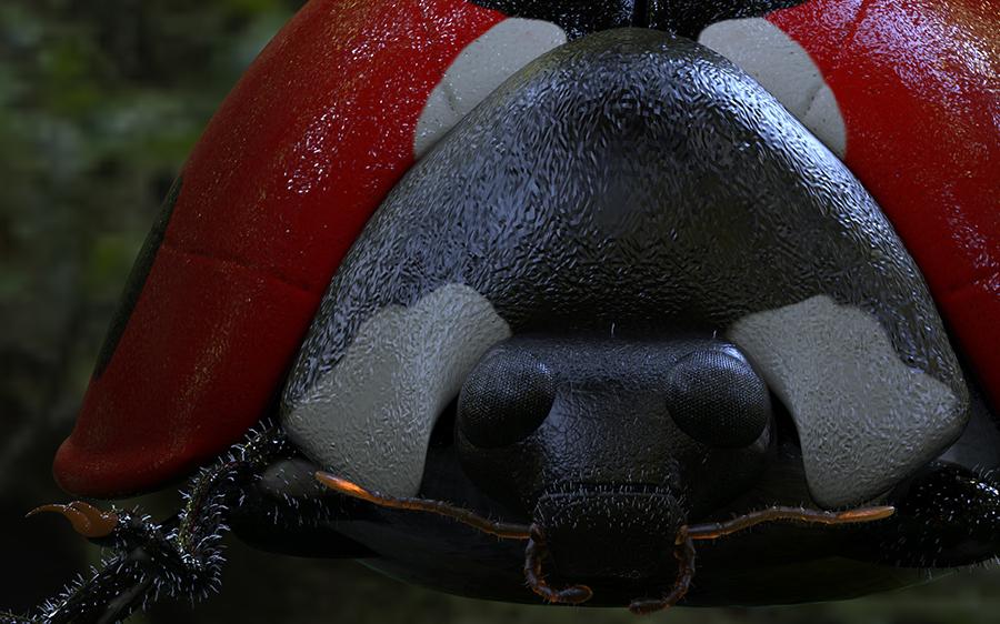 Ladybird.92.jpg