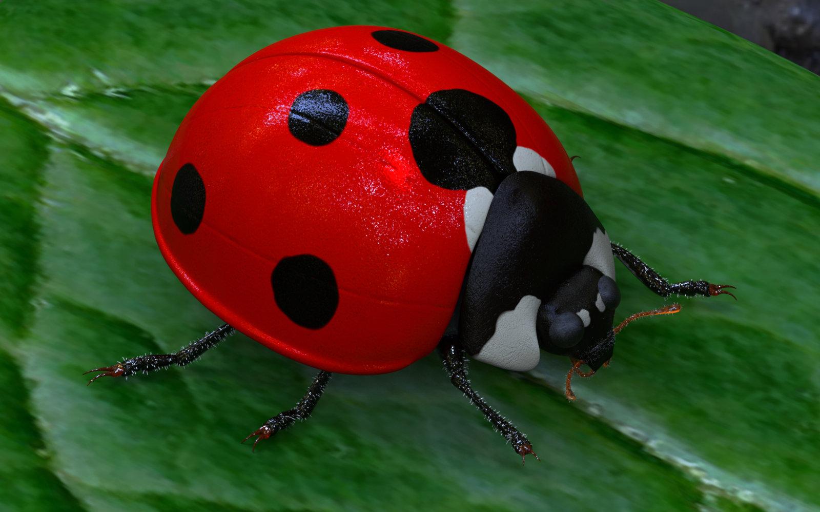Ladybird.99.jpg