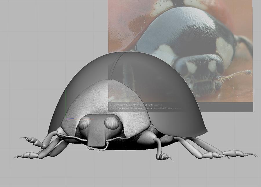 Ladybird4.jpg