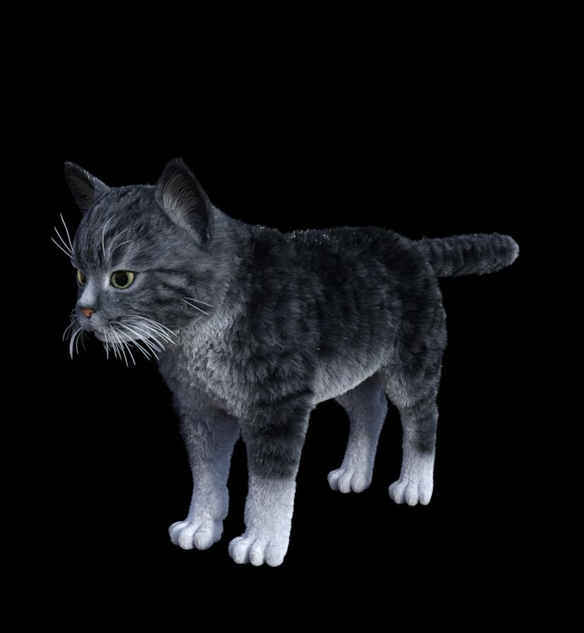 lamh kitten 001.png