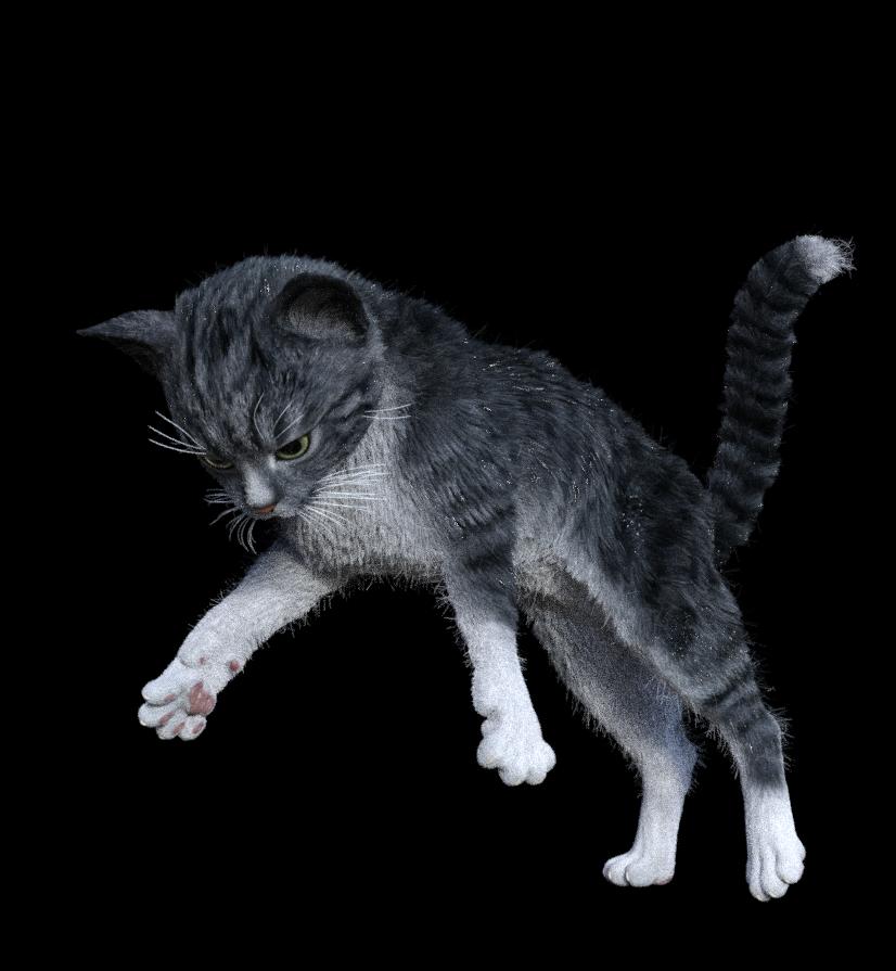 lamh kitten 003.png
