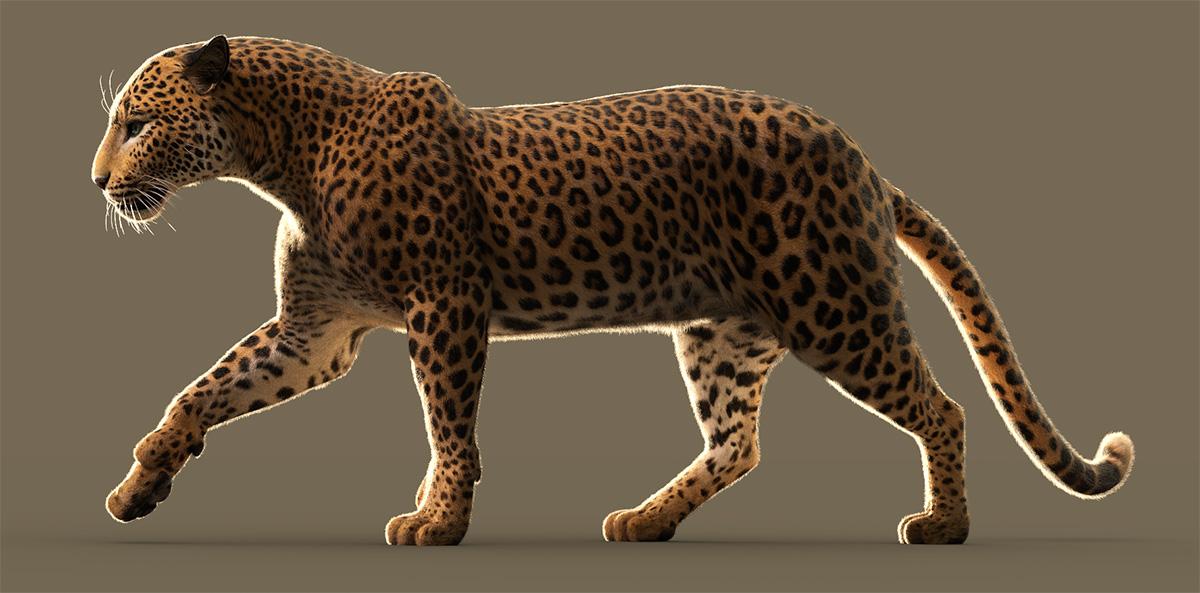 Leopard-African-LAMH-1018.jpg