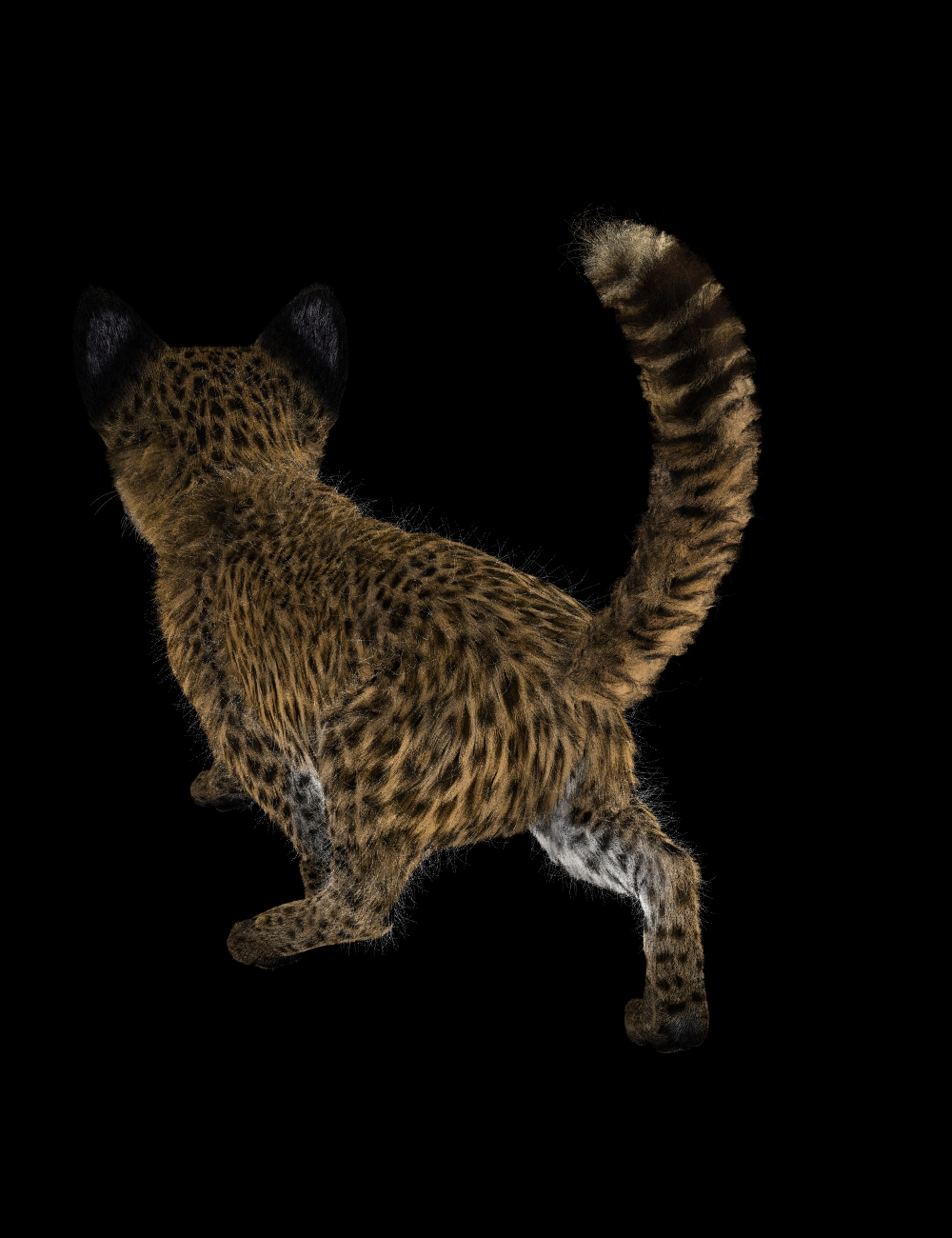 Leopard Kitty with Big ears back view 3Delight.jpg