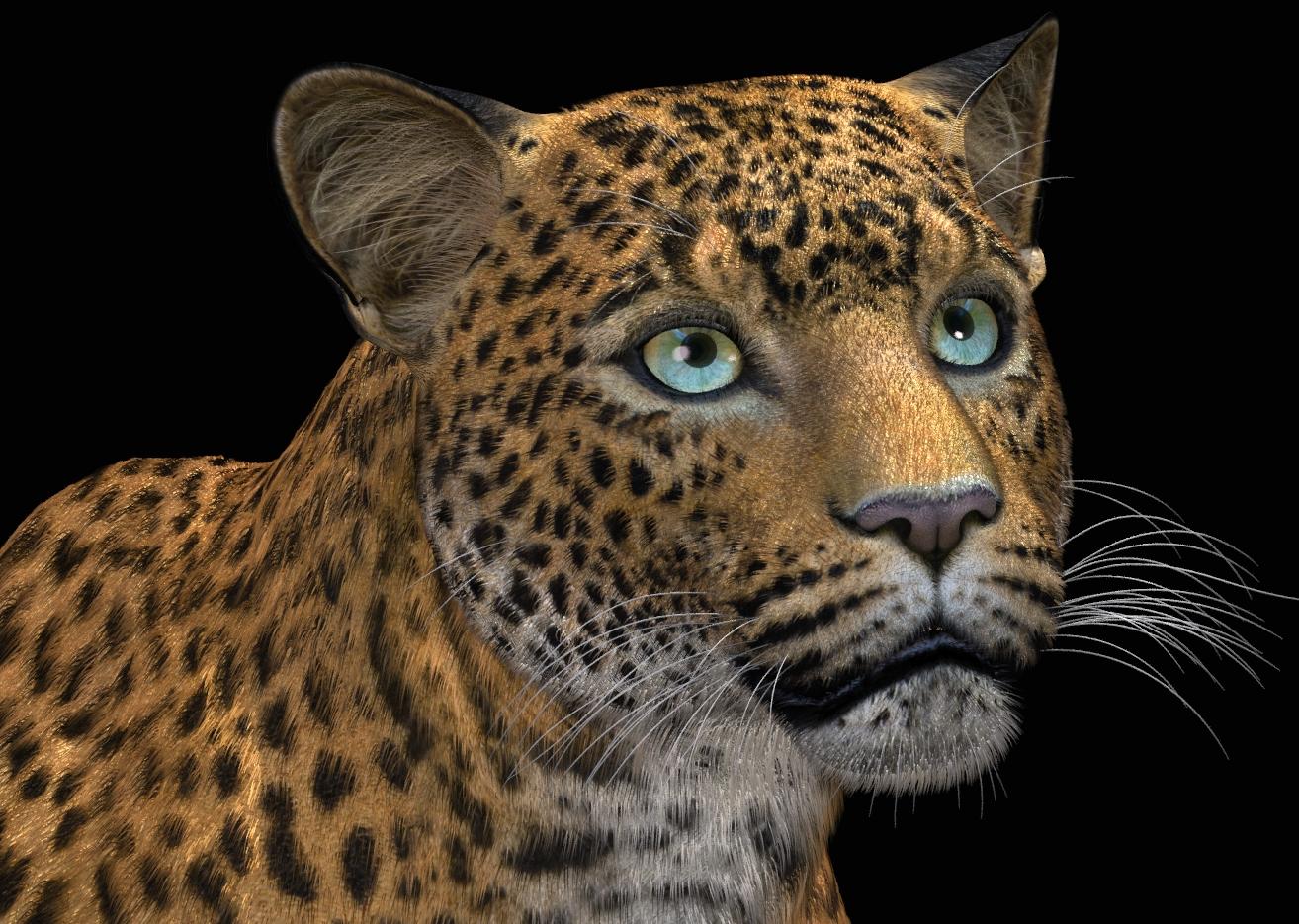LeopardFurSF318a.jpg