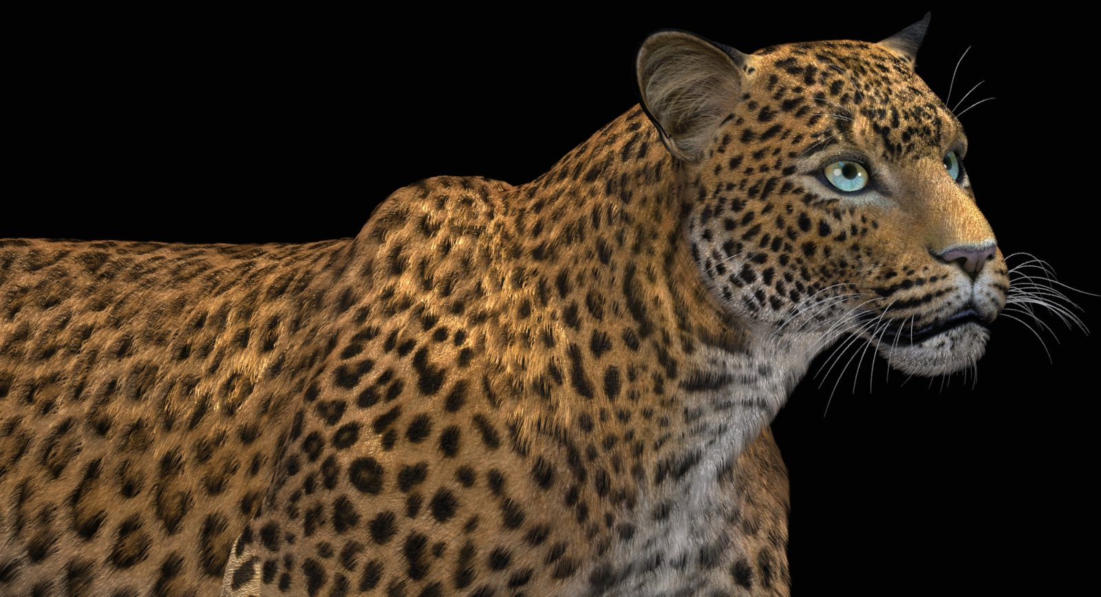 LeopardFurSF318b.jpg