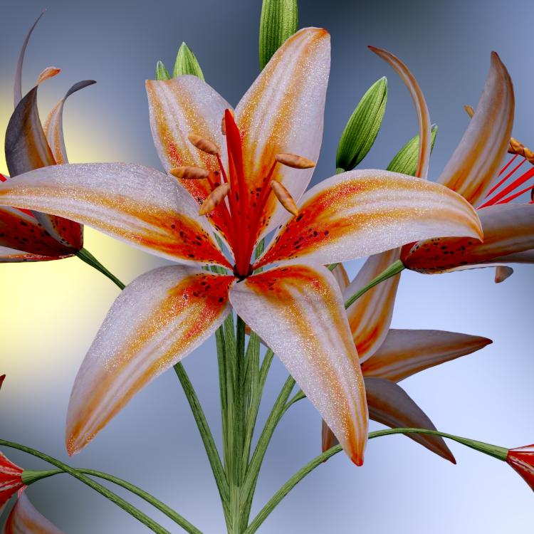 lilies-brilliance-2-tm.jpg