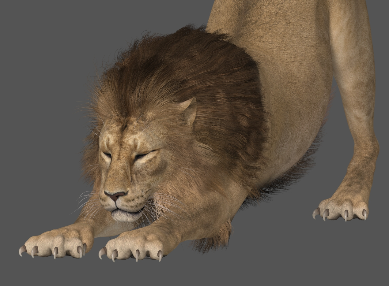 LionPSRhair_SF318d.jpg