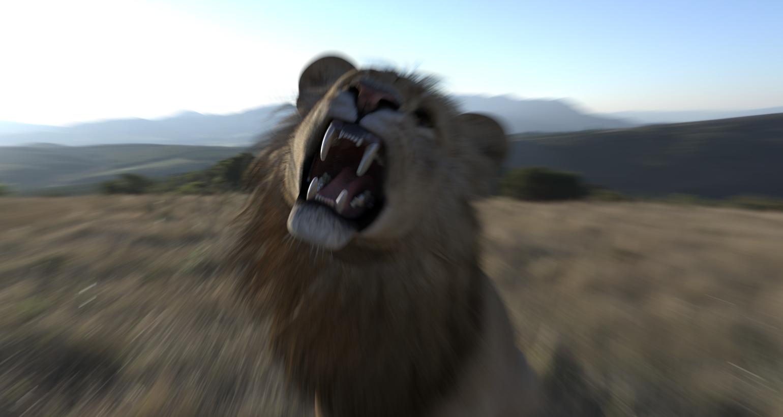 LionsRoara.jpg