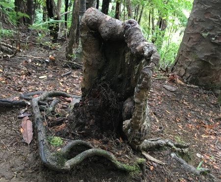 Living Stump.jpg