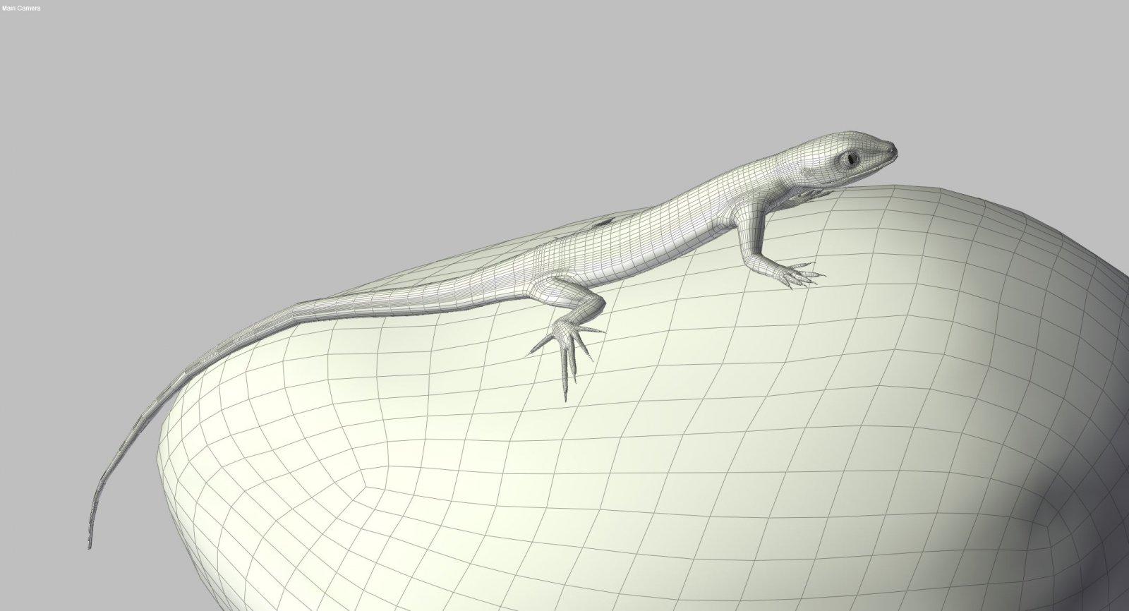 lizard65-1.jpg