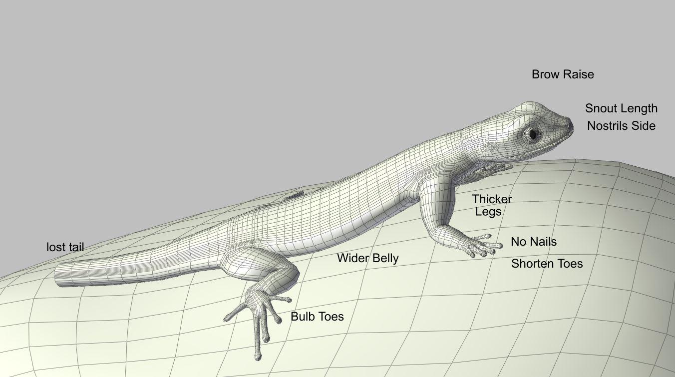 lizard65-2.jpg