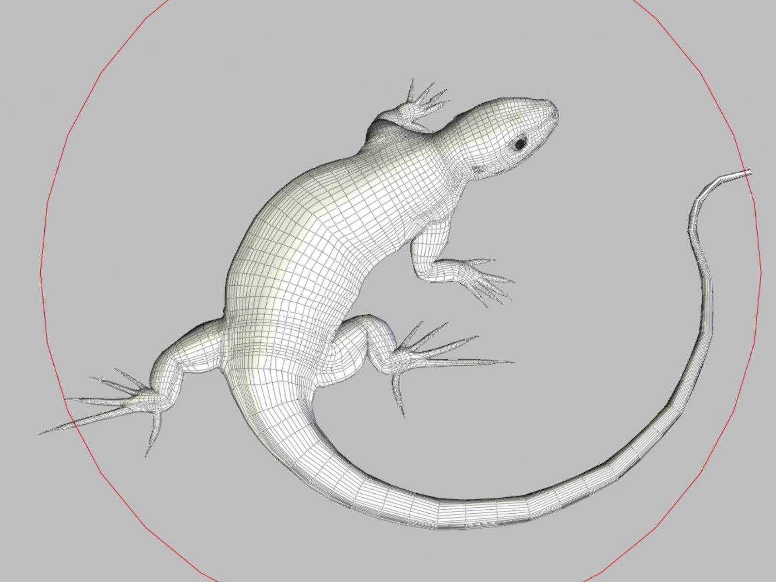 lizard67-2.jpg