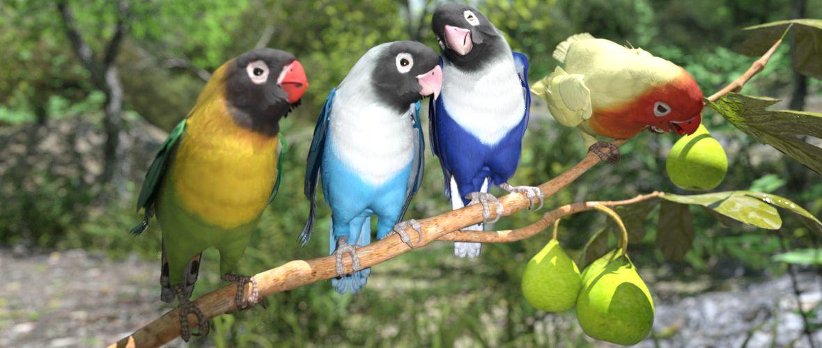 lovebirds-iray.jpg