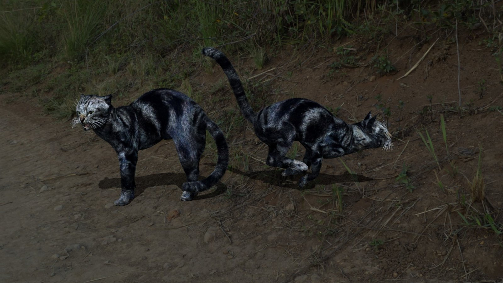 LynxHWcat.jpg