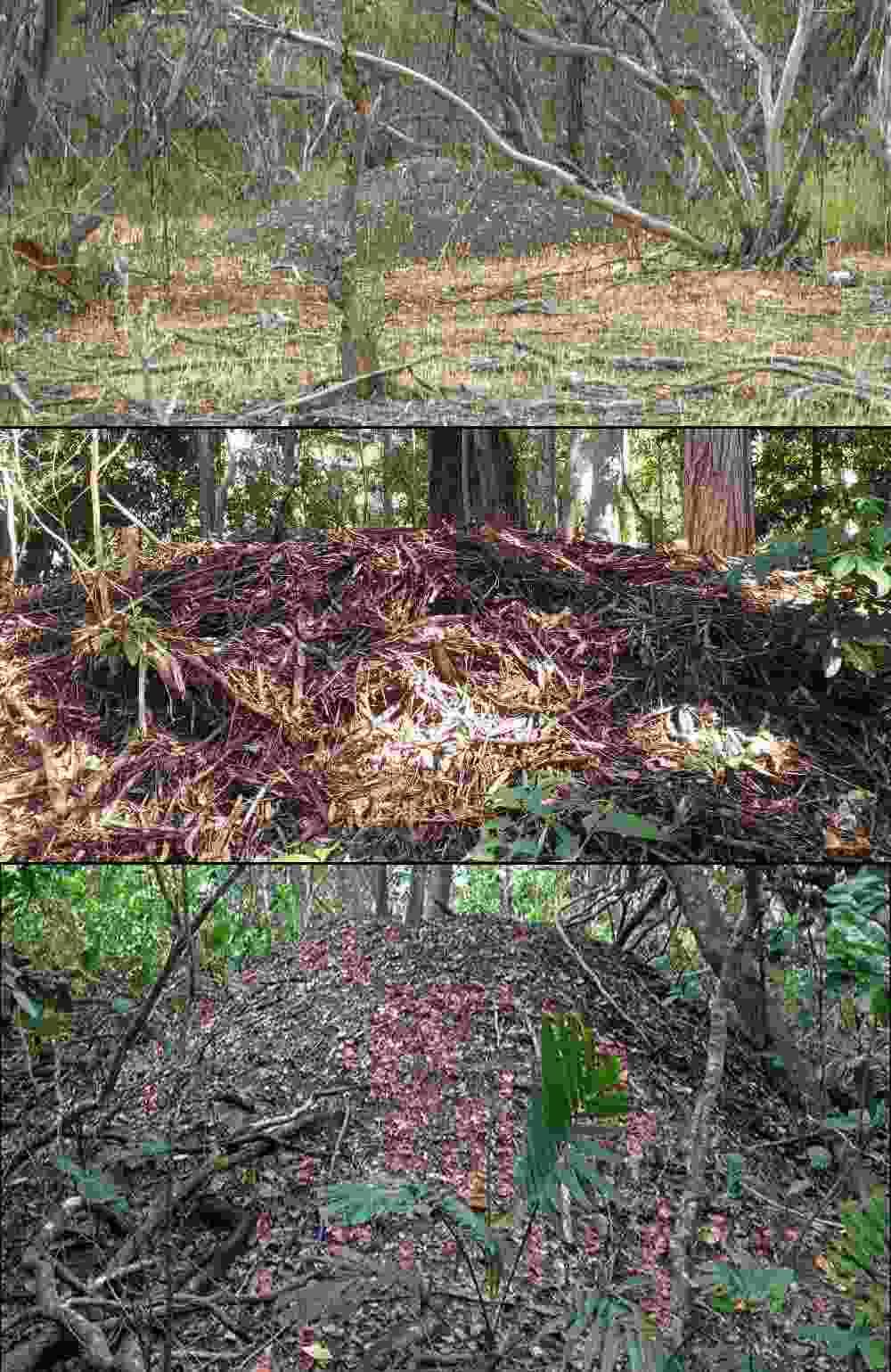 megapodes Nest mounds.jpg