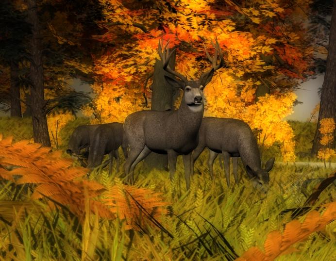 Mule deer family (howler).jpg