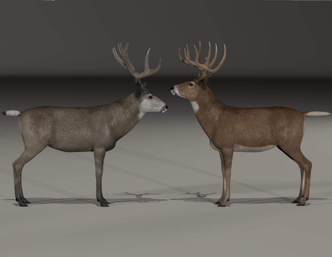 Mule Deer Whitetail comparison 1.png