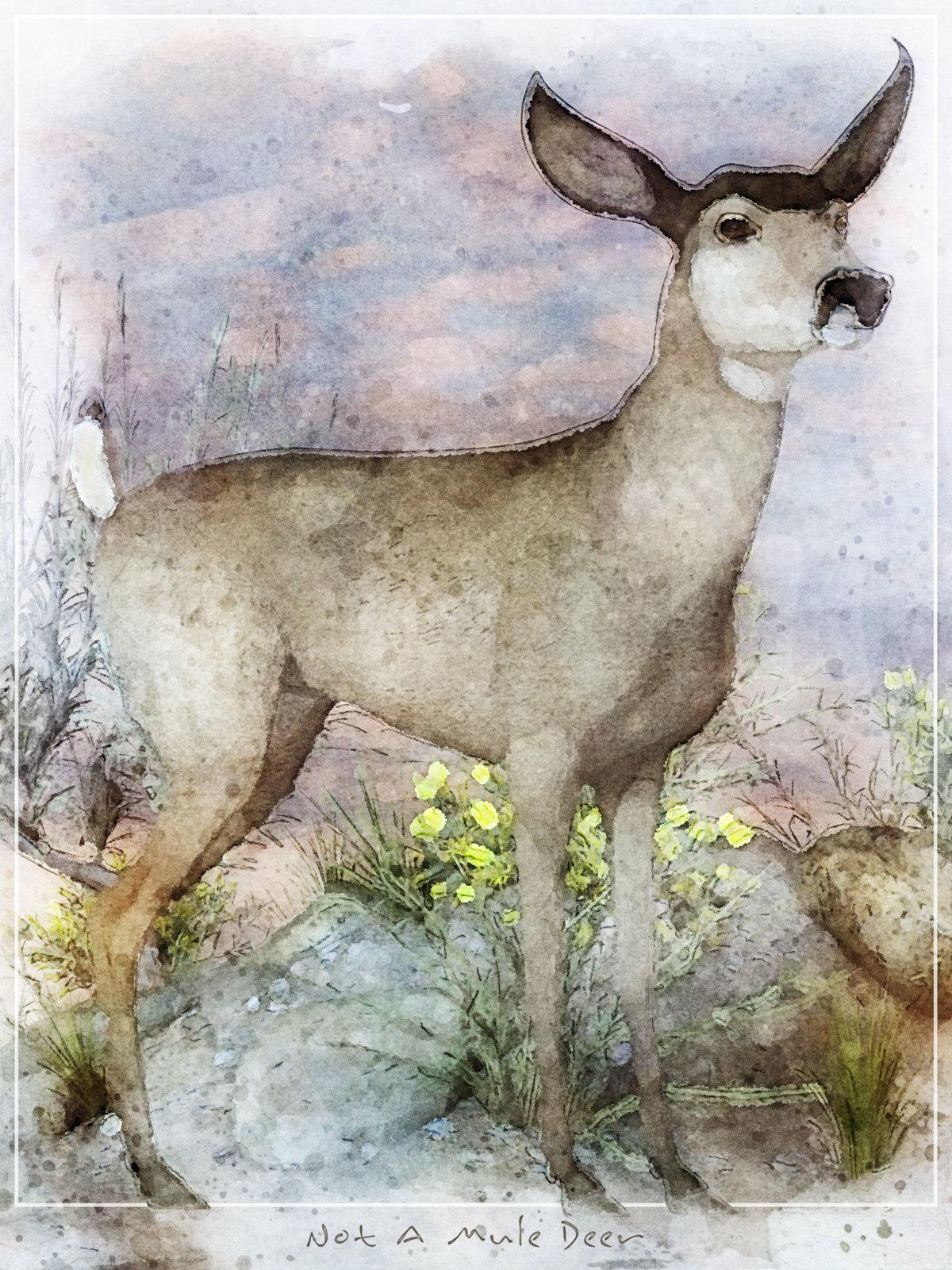 Not A Mule Deer.jpg