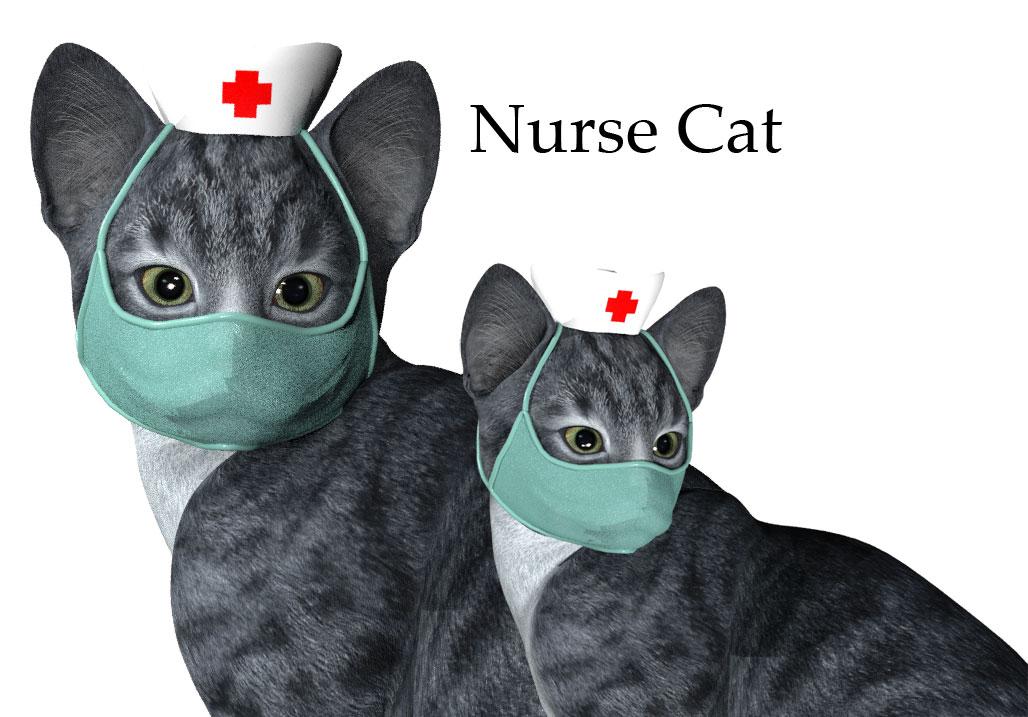 nurse-cat.jpg