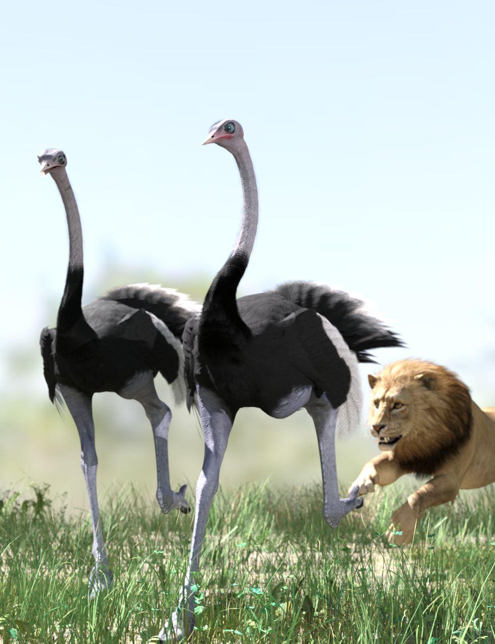 Ostriches-Iray.jpg
