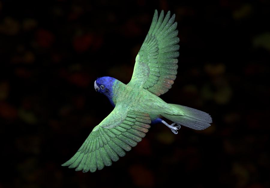 parrotflying.jpg