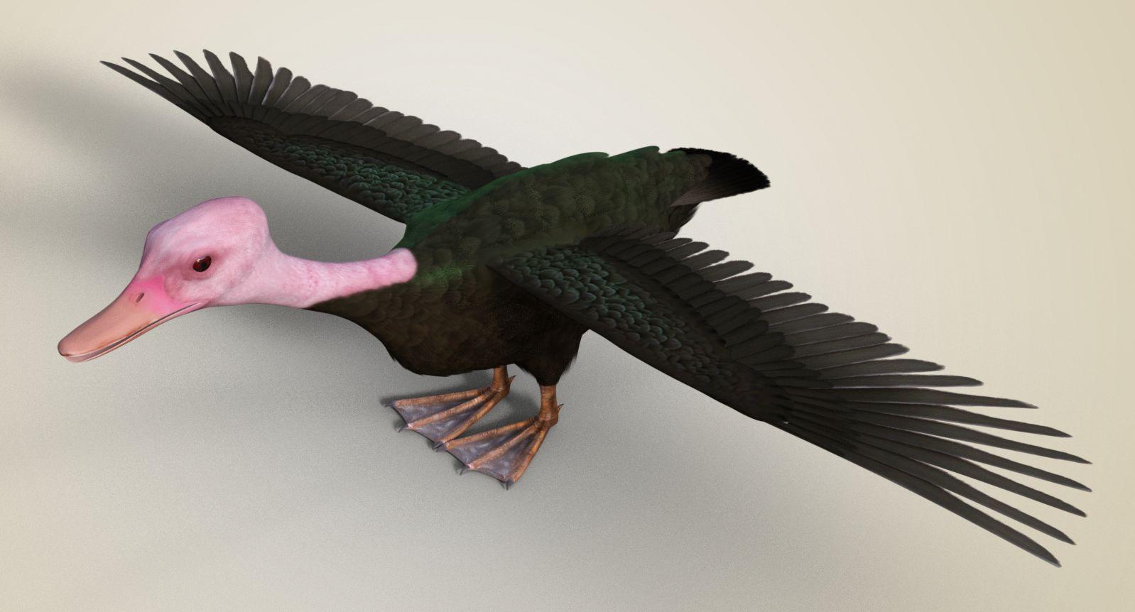 pink-headed duck.jpg