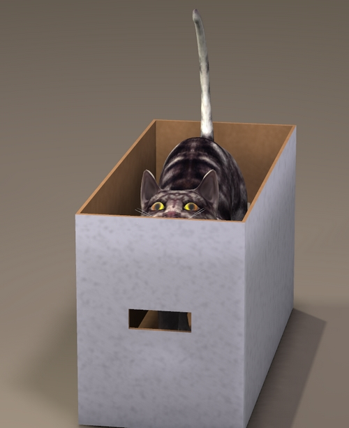 POSER CAT BOX PLAY.jpg