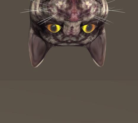 POSER CAT PEEK.jpg