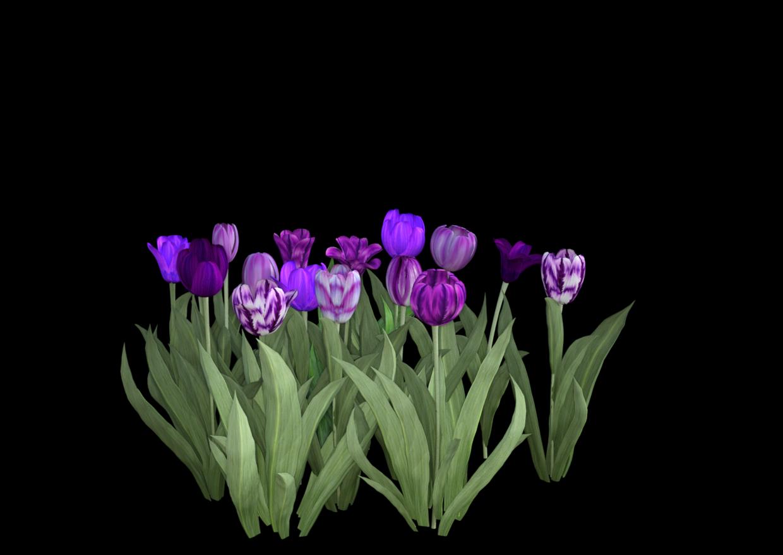 Purple Iray.png