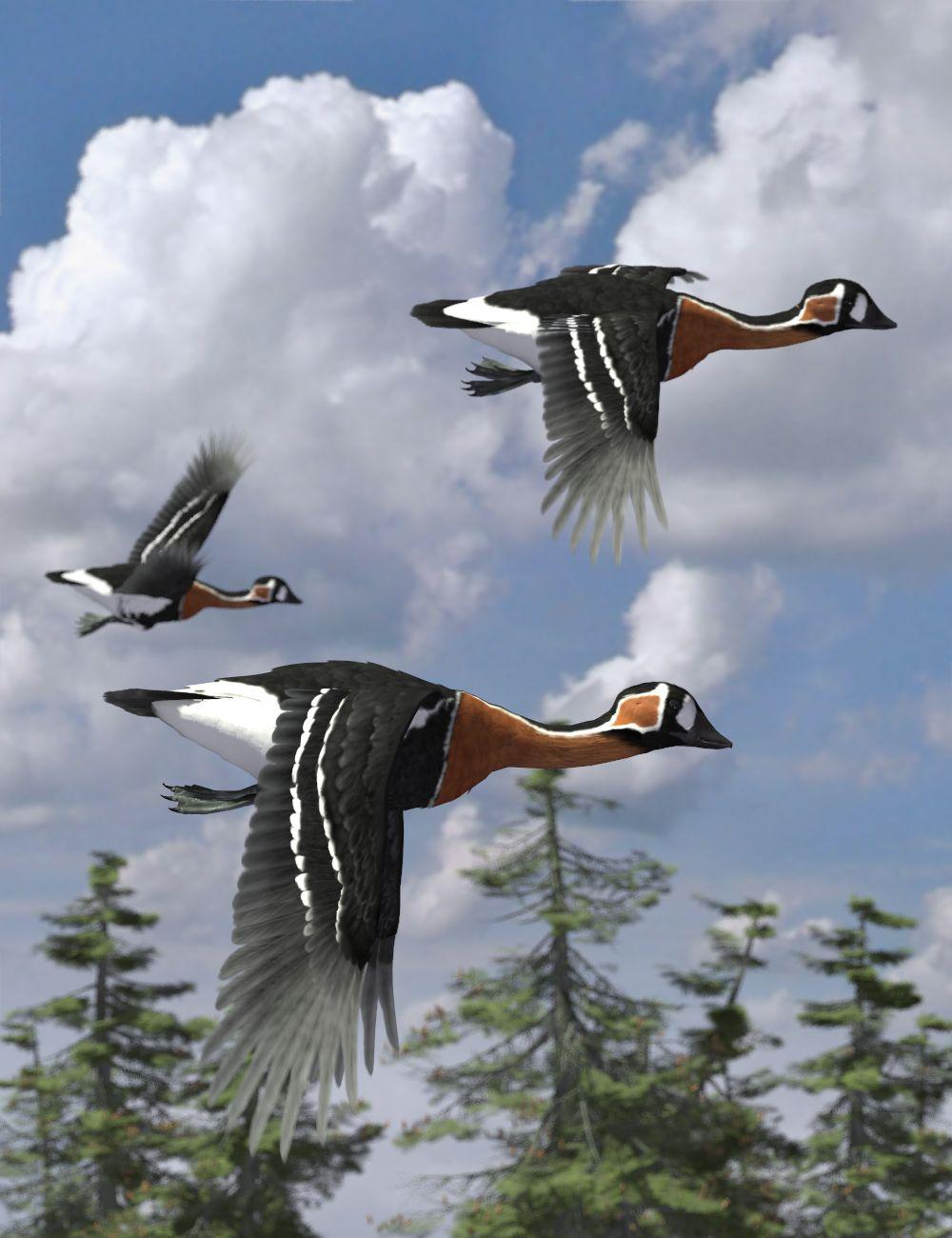 red-breasted geese.jpg