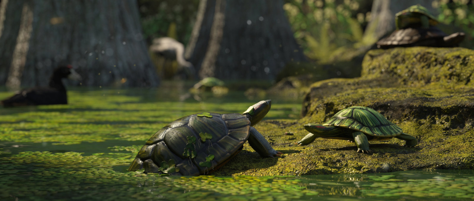 Red Eared Slider 1.jpg