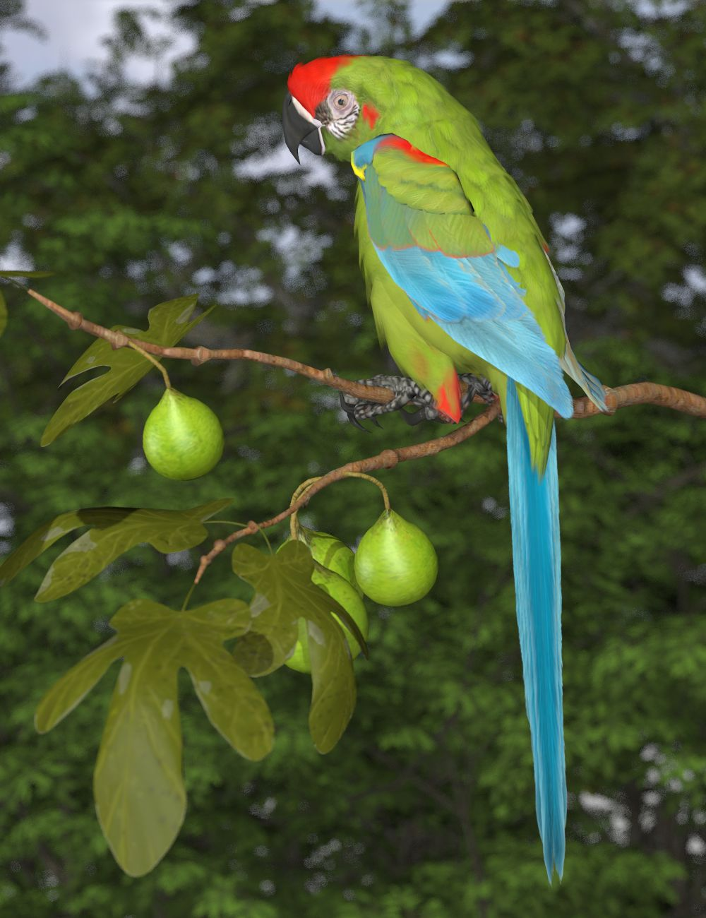Red-fronted Macaw.jpg