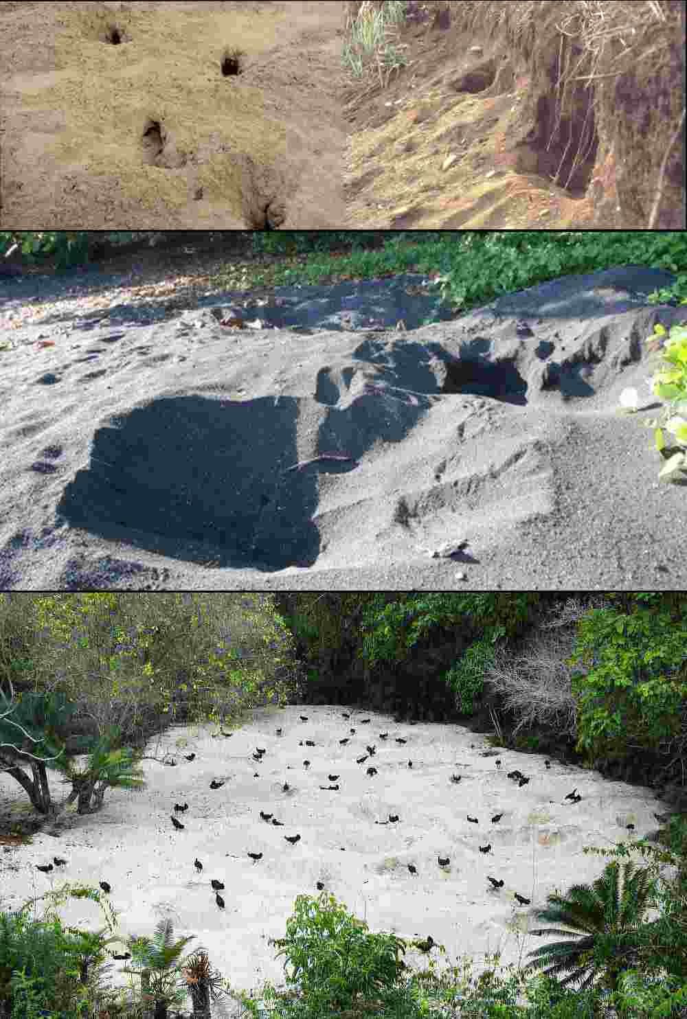 sandy nesting  sites.jpg