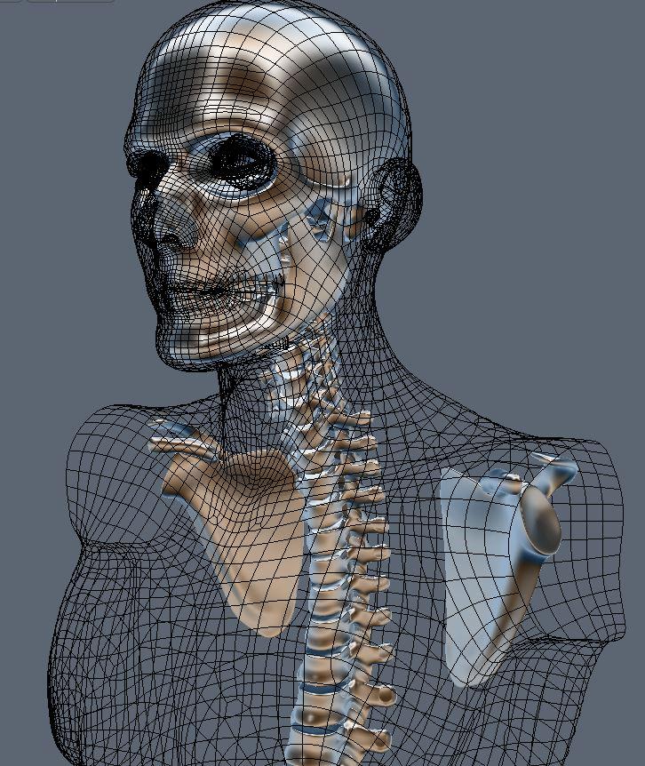 Skull131.JPG
