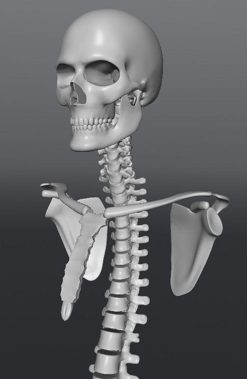 Skull140.JPG