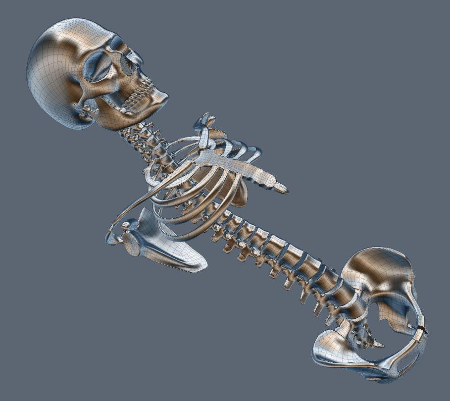 Skull152.JPG