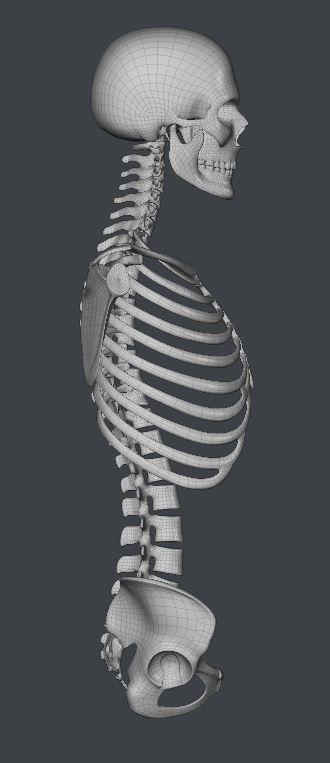 Skull160.JPG