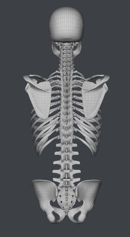 Skull164.JPG