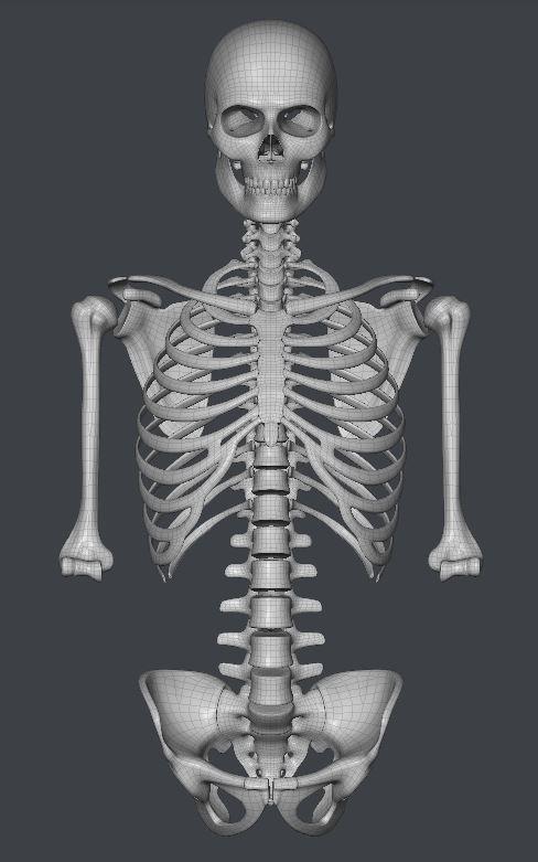 Skull169.JPG